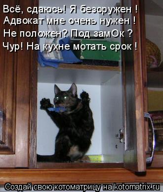Котоматрица: Всё, сдаюсь! Я безоружен ! Адвокат мне очень нужен ! Не положен? Под замОк ? Чур! На кухне мотать срок !
