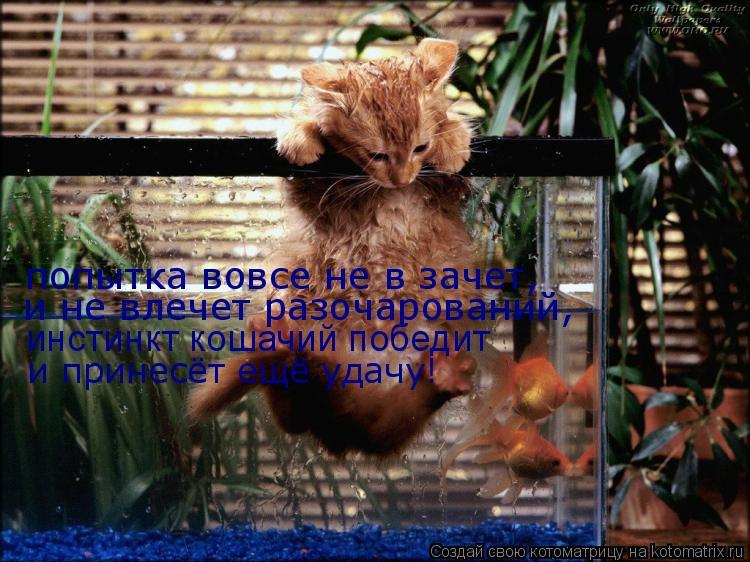 Котоматрица: и принесёт ещё удачу! инстинкт кошачий победит и не влечет разочарований, попытка вовсе не в зачет,