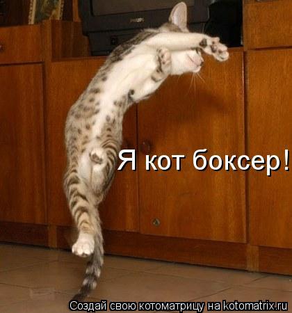 Котоматрица: Я кот боксер!