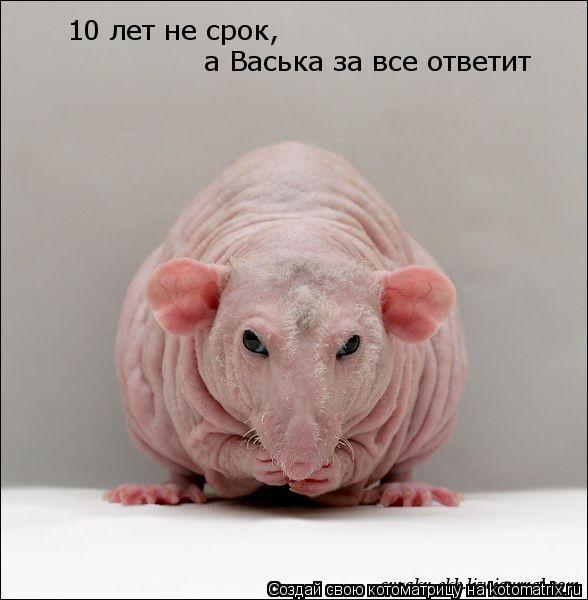 Котоматрица: 10 лет не срок а Васька за все ответит а Васька за все ответит , ,