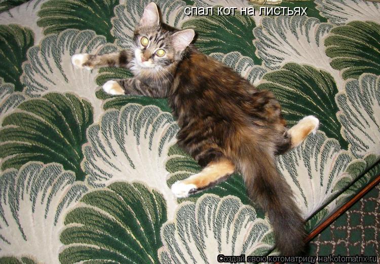 Котоматрица: спал кот на листьях