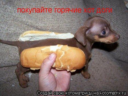 Котоматрица: покупайте горячие хот доги