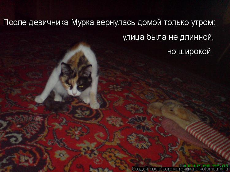 Котоматрица: После девичника Мурка вернулась домой только утром: улица была не длинной, но широкой.