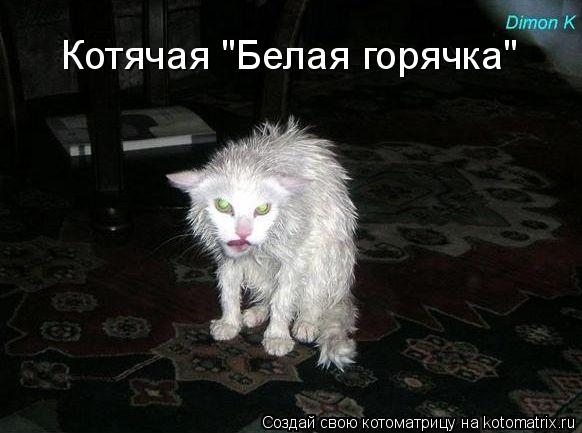 "Котоматрица: Котячая ""Белая горячка"""