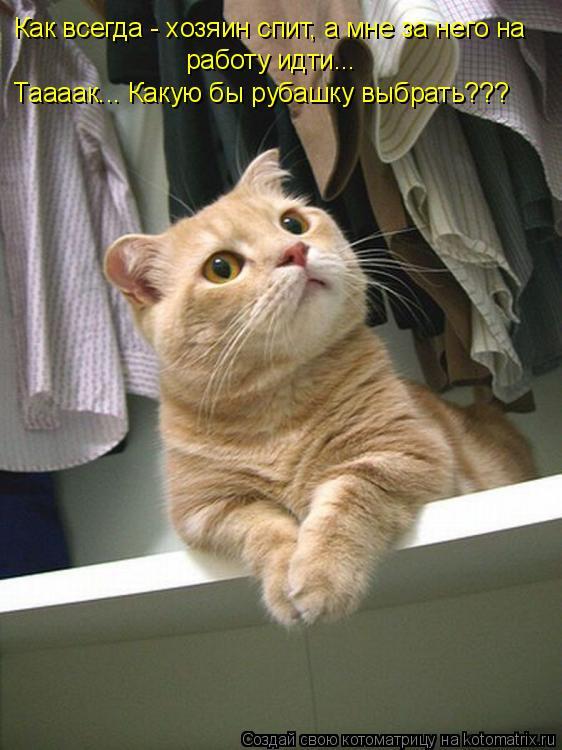 Котоматрица: Как всегда - хозяин спит, а мне за него на работу идти... Таааак... Какую бы рубашку выбрать???