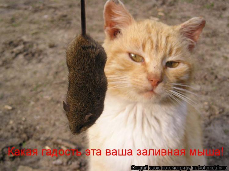 Котоматрица: Какая гадость эта ваша заливная мыша!