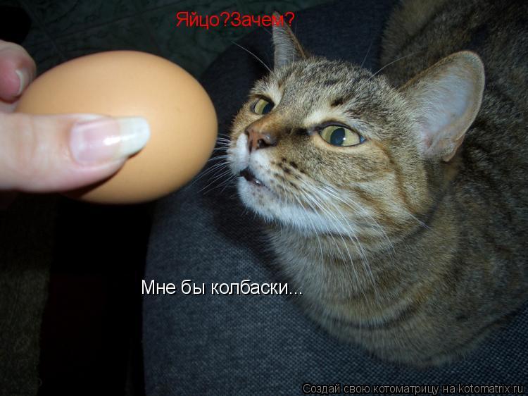 Котоматрица: Яйцо?Зачем? Мне бы колбаски...