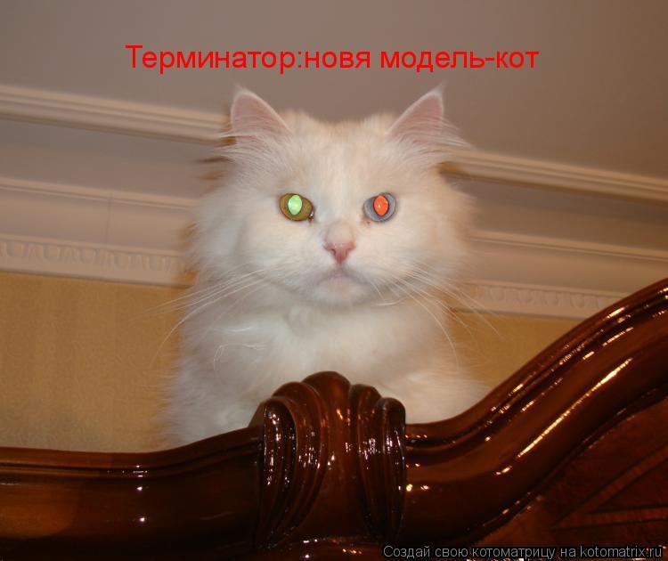 Котоматрица: Терминатор:новя модель-кот