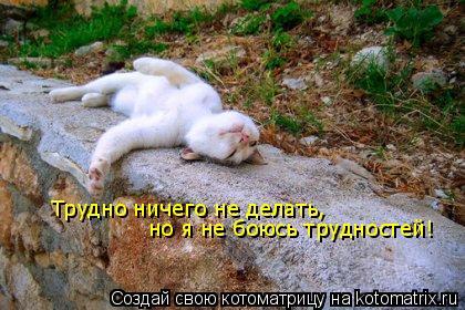 Котоматрица: Трудно ничего не делать,  но я не боюсь трудностей!