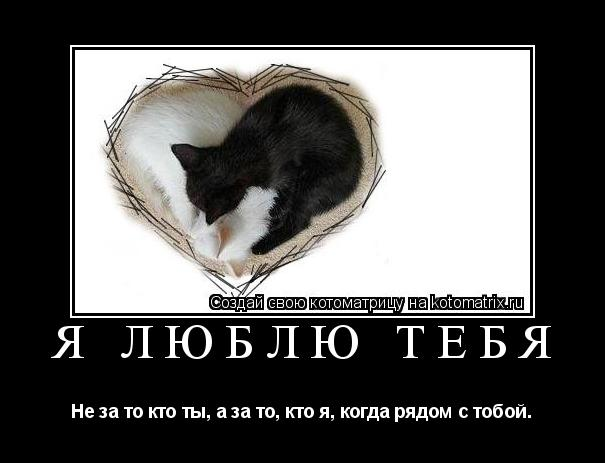 Котоматрица: Я люблю тебя Не за то кто ты, а за то, кто я, когда рядом с тобой.