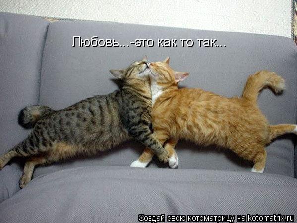 Котоматрица: Любовь...-это как то так...