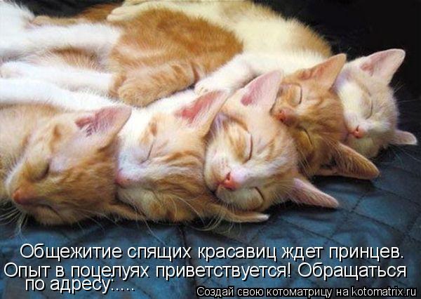 Котоматрица: Общежитие спящих красавиц ждет принцев. Опыт в поцелуях приветствуется! Обращаться по адресу:....