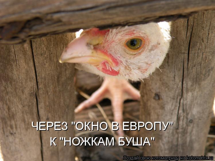 """Котоматрица: ЧЕРЕЗ """"ОКНО В ЕВРОПУ"""" К """"НОЖКАМ БУША"""""""