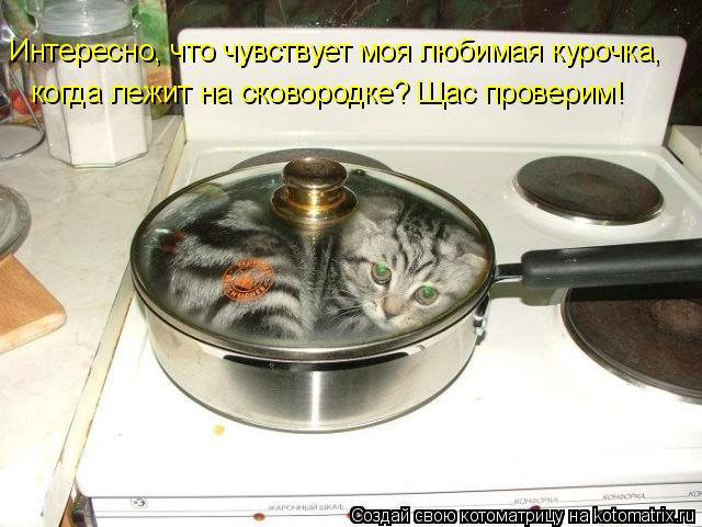 Котоматрица: Интересно, что чувствует моя любимая курочка, когда лежит на сковородке? Щас проверим!