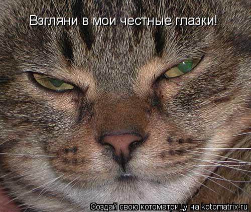 Котоматрица: Взгляни в мои честные глазки!