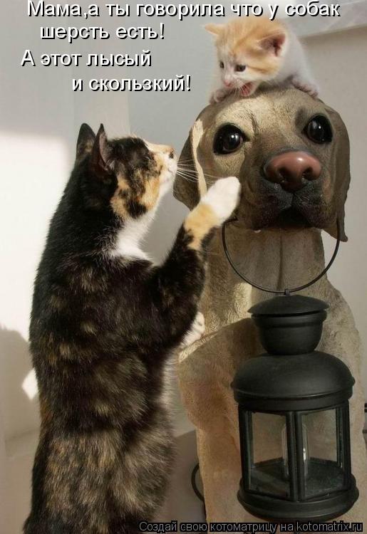Котоматрица: Мама,а ты говорила что у собак  шерсть есть! А этот лысый  и скользкий!