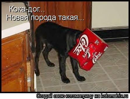 Котоматрица: Кока-дог... Кока-дог... Новая порода такая...