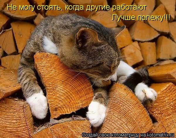 Котоматрица: Не могу стоять, когда другие работают Лучше полежу!!!