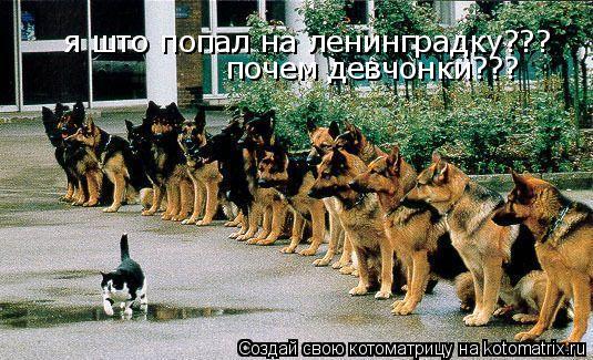 Котоматрица: я што попал на ленинградку??? почем девчонки???