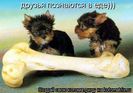 Котоматрица: друзья познаются в еде)))