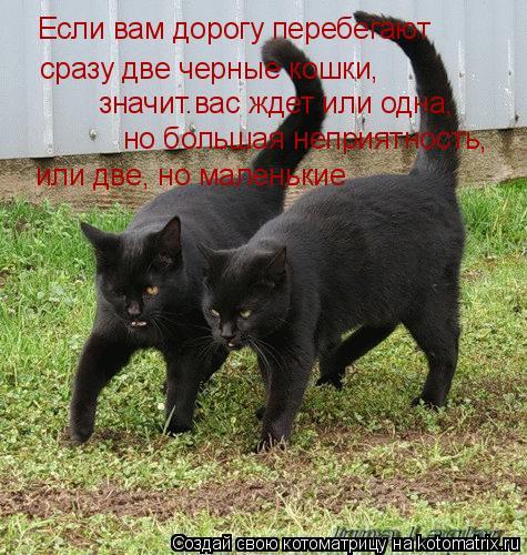 Котоматрица: Если вам дорогу перебегают  сразу две черные кошки, значит.вас ждет или одна,  но большая неприятность, или две, но маленькие
