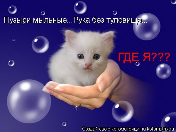 Котоматрица: Пузыри мыльные...Рука без туловища... ГДЕ Я???