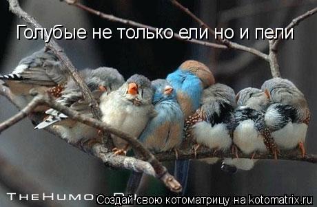Котоматрица: Голубые не только ели но и пели