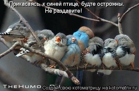 Котоматрица: Прикасаясь, к синей птице, будте острожны. Не раздавите!