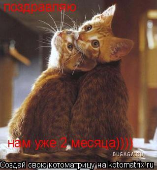 Котоматрица: поздравляю нам уже 2 месяца))))
