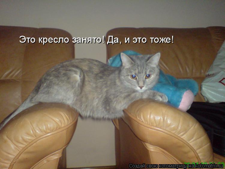 Котоматрица: Это кресло занято! Да, и это тоже!