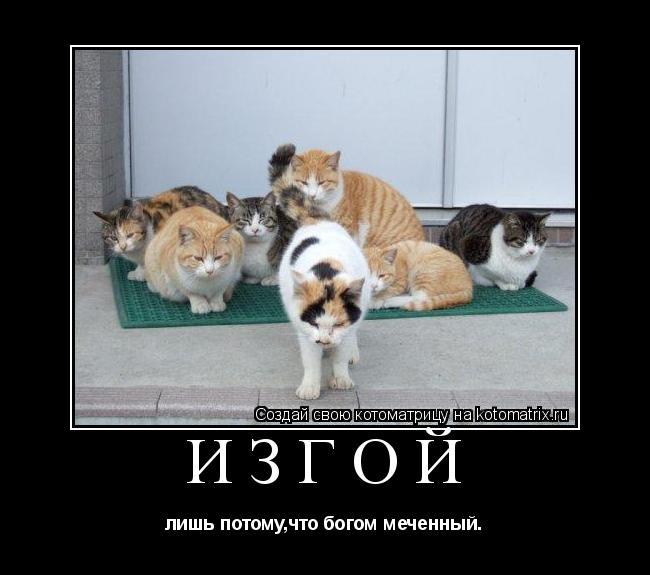 Котоматрица: Изгой лишь потому,что богом меченный.