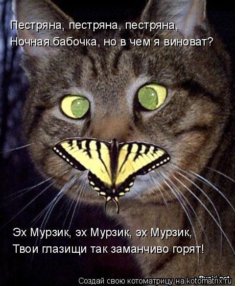 Котоматрица: Пестряна, пестряна, пестряна, Ночная бабочка, но в чем я виноват? Эх Мурзик, эх Мурзик, эх Мурзик, Твои глазищи так заманчиво горят!