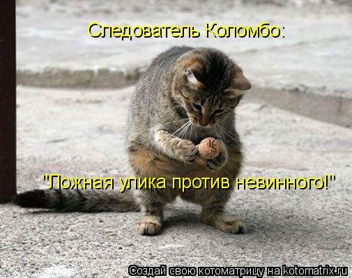 """Котоматрица: Следователь Коломбо: """"Ложная улика против невинного!"""""""