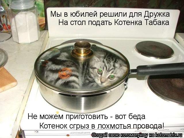 Котоматрица: Мы в юбилей решили для Дружка На стол подать Котенка Табака Не можем приготовить - вот беда Котенок сгрыз в лохмотья провода!