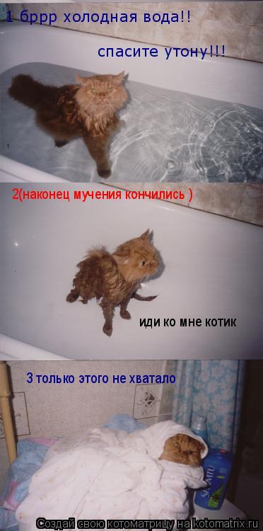 Котоматрица: спасите утону!!! 2(наконец мучения кончились ) 1 бррр холодная вода!! иди ко мне котик  3 только этого не хватало