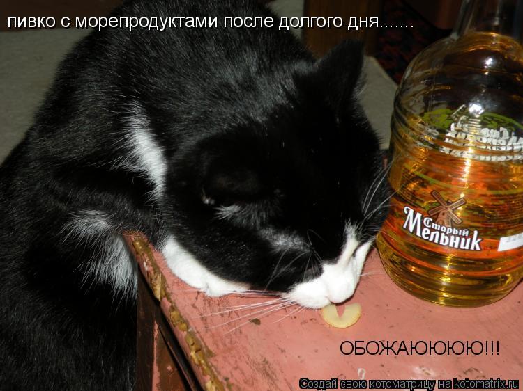 Котоматрица: пивко с морепродуктами после долгого дня....... ОБОЖАЮЮЮЮ!!!