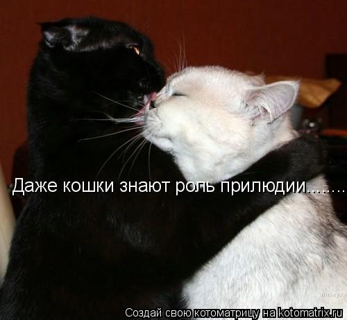 Котоматрица: Даже кошки знают роль прилюдии........ Даже кошки знают роль прилюдии........