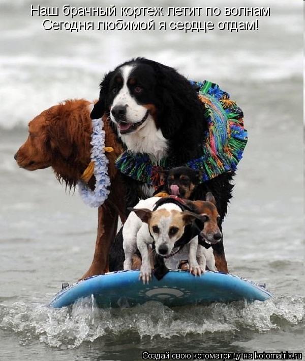 Котоматрица: Наш брачный кортеж летит по волнам Сегодня любимой я сердце отдам!