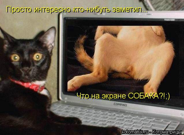 Котоматрица: Просто интересно кто-нибуть заметил... Что на экране СОБАКА?!;)