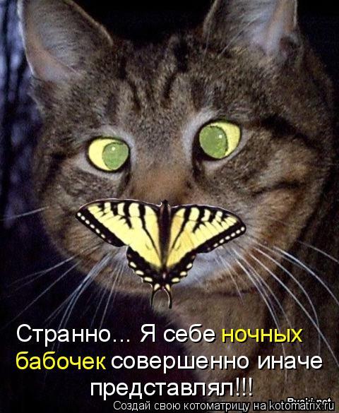 Котоматрица: Странно... Я себе ночных  бабочек совершенно иначе представлял!!!