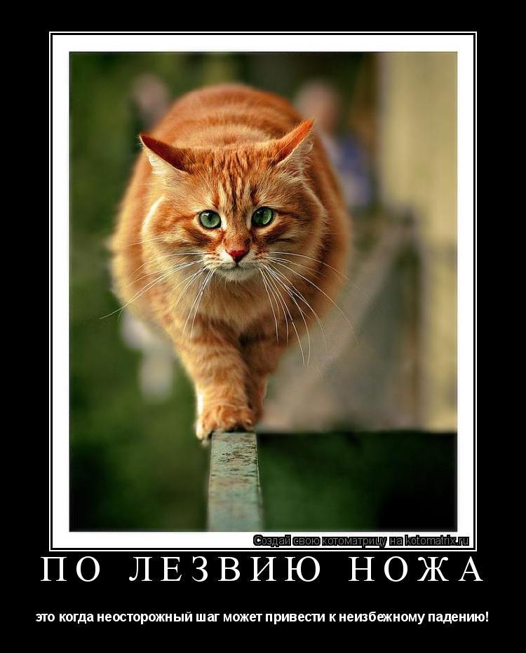 Котоматрица: ПО ЛЕЗВИЮ НОЖА это когда неосторожный шаг может привести к неизбежному падению!