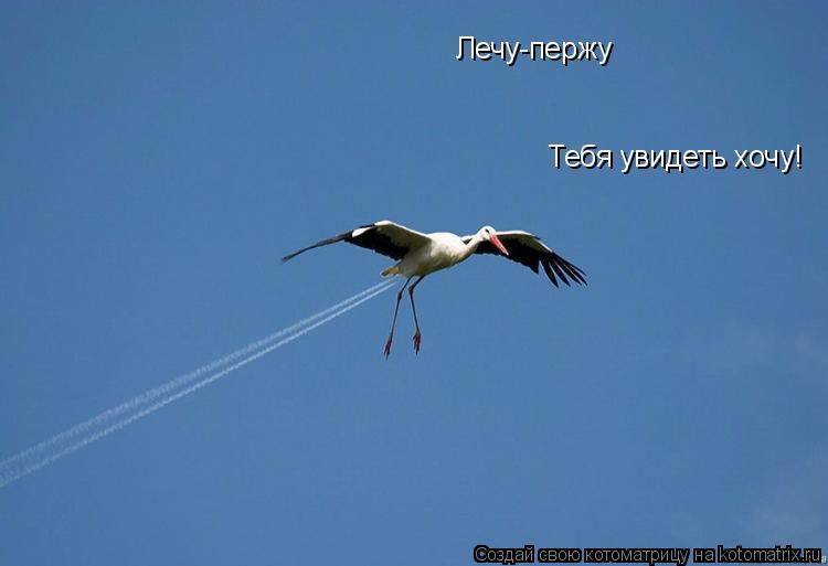 Котоматрица: Лечу-пержу Тебя увидеть хочу!