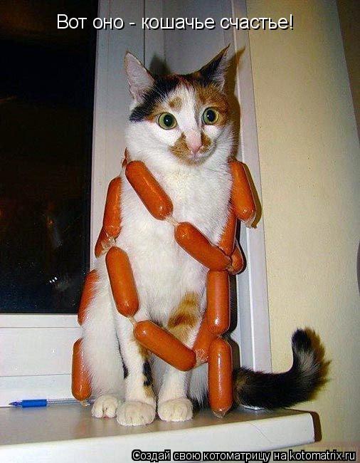 Котоматрица: Вот оно - кошачье счастье!