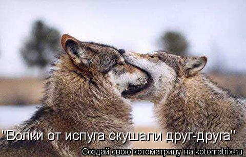 "Котоматрица: ""Волки от испуга скушали друг-друга"""