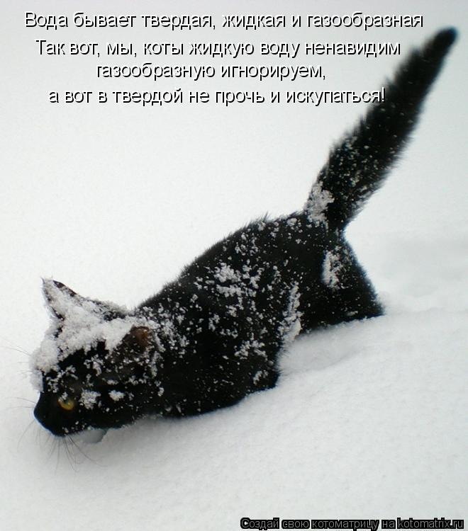 Котоматрица: Вода бывает твердая, жидкая и газообразная  Так вот, мы, коты жидкую воду ненавидим газообразную игнорируем, а вот в твердой не прочь и искуп