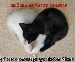 Котоматрица: любовь не то что кажется