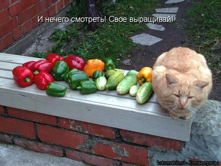 Котоматрица: И нечего смотреть! Свое выращивай!