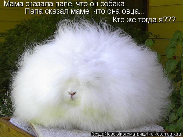 Котоматрица: Мама сказала папе, что он собака... Папа сказал маме, что она овца... Кто же тогда я???