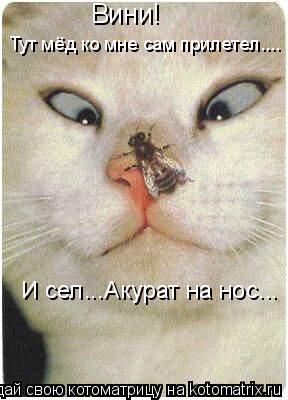 Котоматрица: Вини!  Тут мёд ко мне сам прилетел.... И сел...Акурат на нос... Вини!
