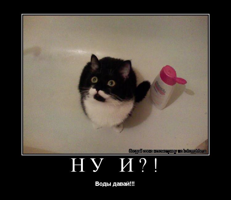 Котоматрица: Ну и?! Воды давай!!!